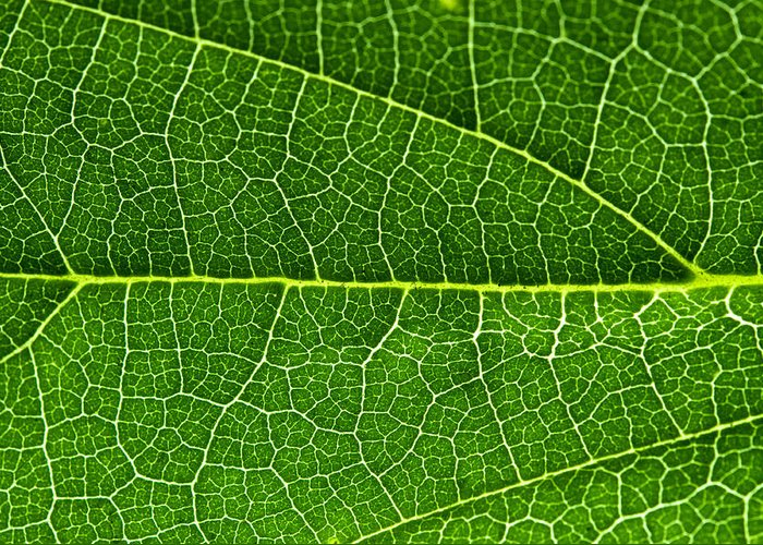 Macro Greeting Card featuring the photograph Leaf by Fabrizio Troiani