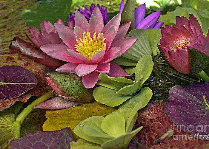 Pink Water Lily Greeting Card featuring the photograph Lilies No. 33 by Anne Klar