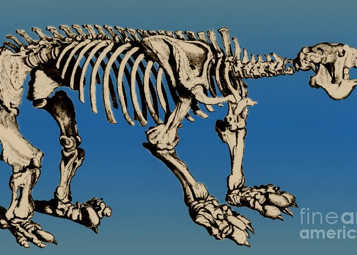 History Greeting Card featuring the photograph Megatherium Extinct Ground Sloth by Science Source