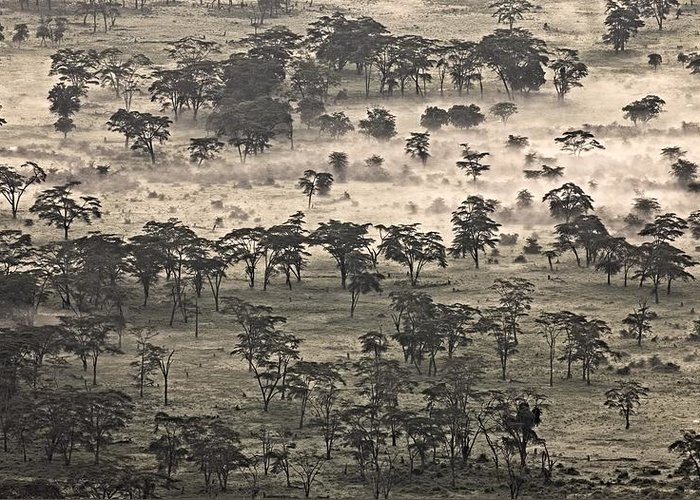 African Greeting Card featuring the photograph Ngorongoro Crater, Tanzania, Africa by Carson Ganci