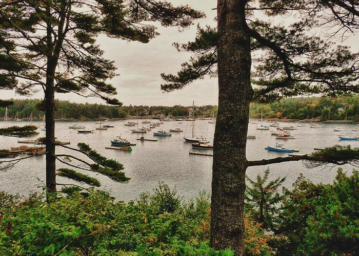 Harbor Greeting Card featuring the photograph Northeast Harbor by Kelly Reber