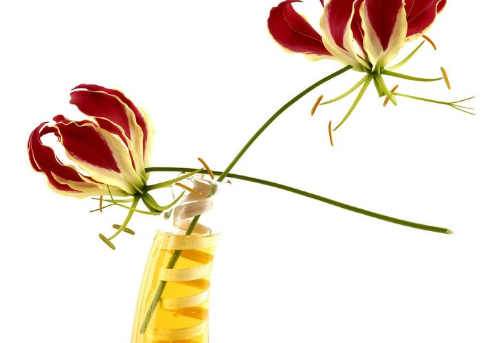 Bloom Greeting Card featuring the photograph Orchids by Bernard Jaubert