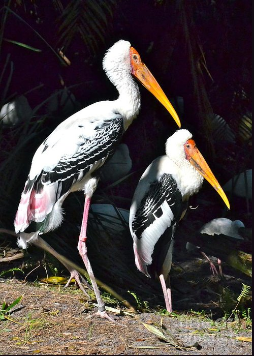 Stork Greeting Card featuring the photograph Painted Storks by Carol Bradley