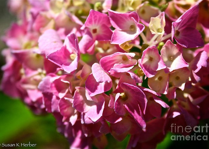 Outdoors Greeting Card featuring the photograph Pink Party by Susan Herber