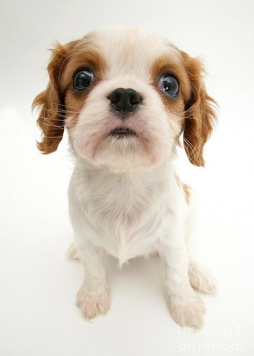 Animal Greeting Card featuring the photograph Puppy by Jane Burton