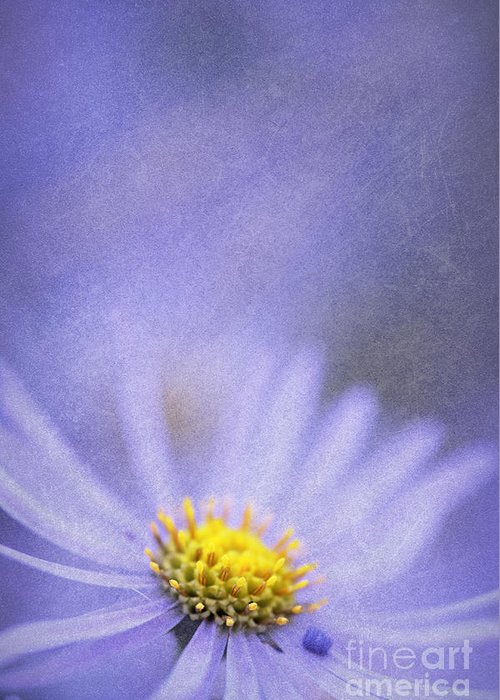 Flower Greeting Card featuring the photograph Purple Aster by Neil Overy