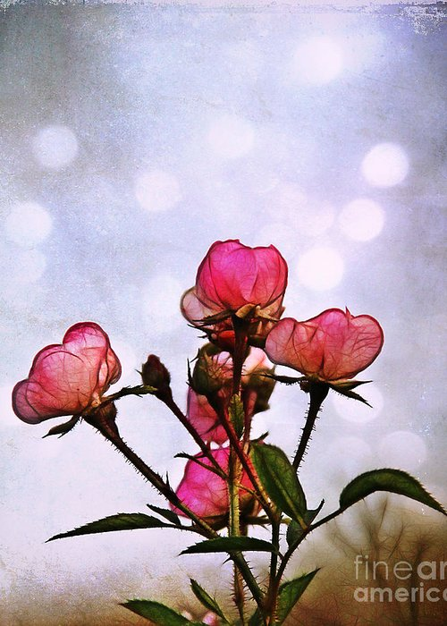 Rose Greeting Card featuring the photograph Reaching For The Light by Judi Bagwell
