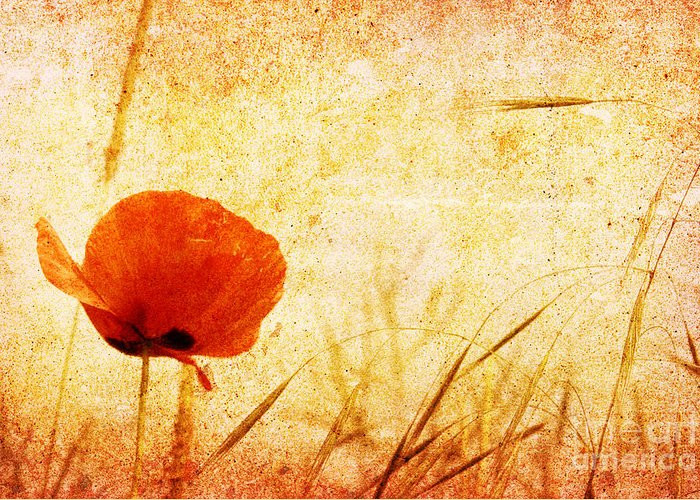 Ancient Greeting Card featuring the photograph Red Poppy by Christophe ROLLAND