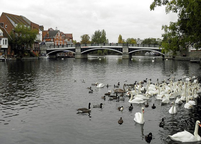 River Greeting Card featuring the photograph River Thames At Windsor by Diane Barrett