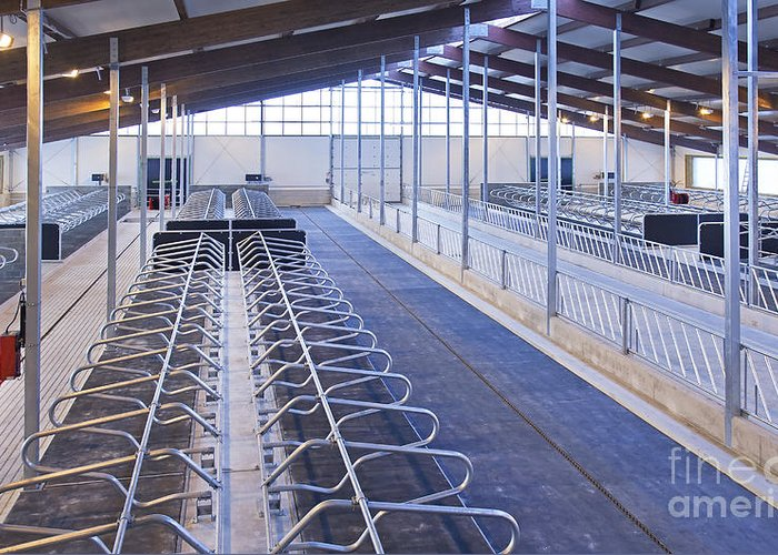 Agricultural Greeting Card featuring the photograph Row Of Cattle Cubicles by Jaak Nilson