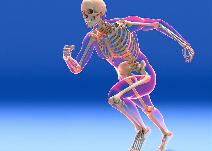 Human Greeting Card featuring the photograph Running Skeleton In Body, Artwork by Roger Harris