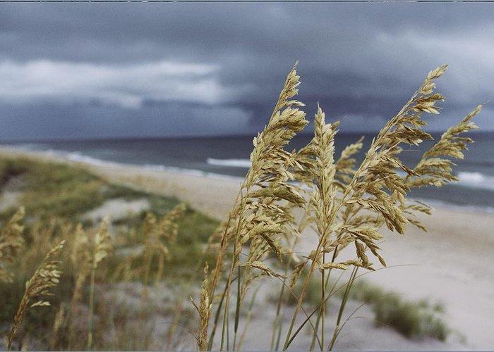 Atlantic Ocean Greeting Card featuring the photograph Sea Oats Uniola Panicolata Help Anchor by David Alan Harvey