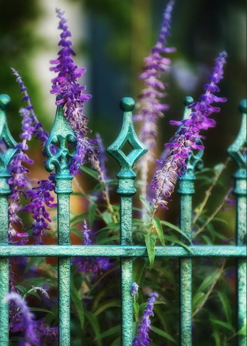 Lavender Greeting Card featuring the photograph Secret Garden by Brenda Bryant