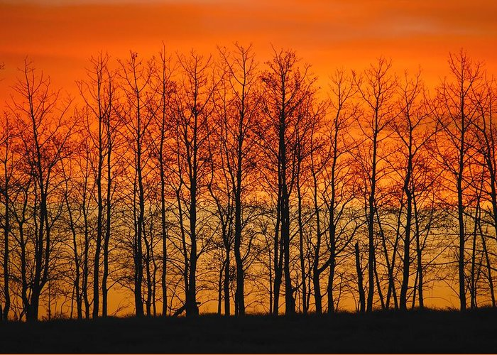 Horizontal Greeting Card featuring the photograph Silhouette Of Trees Against Sunset by Don Hammond