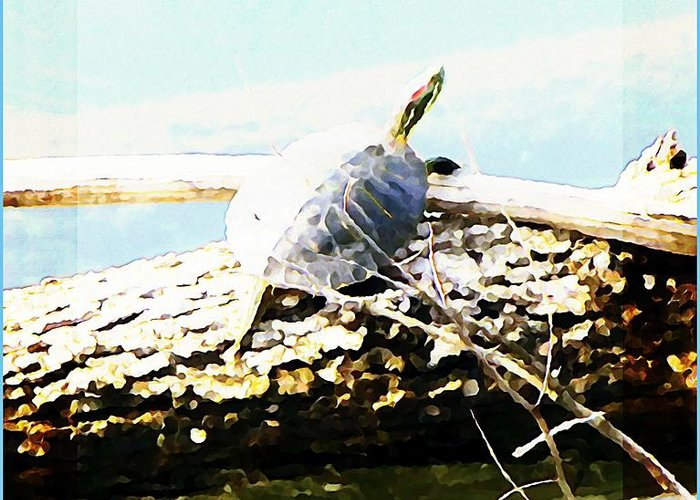 Turtle Greeting Card featuring the photograph Sitting Pretty by Mindy Newman