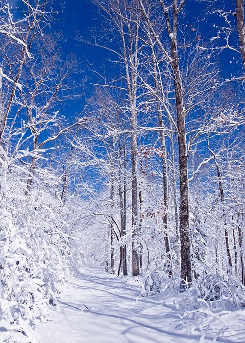 Forest Paths Greeting Card featuring the photograph Snowy Path by Rob Travis
