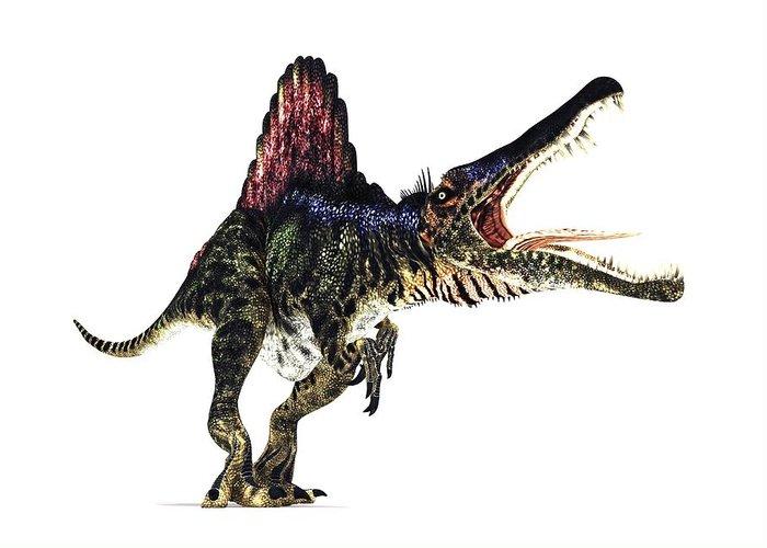 Spinosaurus Greeting Card featuring the photograph Spinosaurus Dinosaur, Artwork by Animate4.comscience Photo Libary