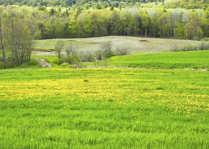 Maine Farmland Greeting Card featuring the photograph Spring Farm Landscape With Dandelion Bloom In Maine by Keith Webber Jr