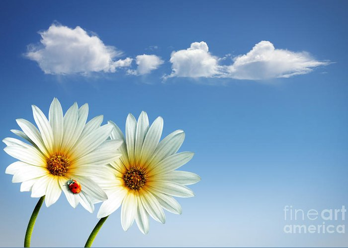 Air Greeting Card featuring the photograph Spring Flowers by Carlos Caetano
