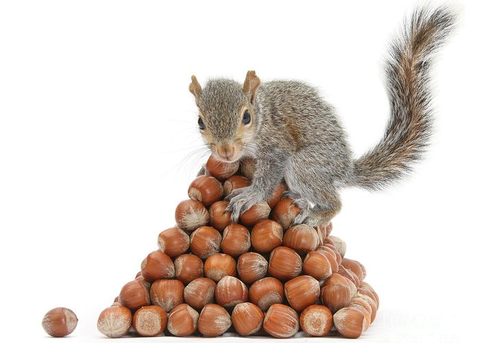 Nature Greeting Card featuring the photograph Squirrel And Nut Pyramid by Mark Taylor