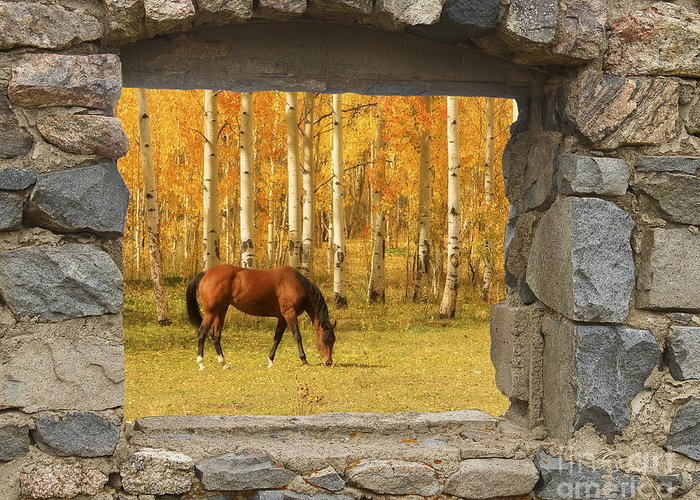 Horse Greeting Card featuring the photograph Stone Window View And Beautiful Horse by James BO Insogna