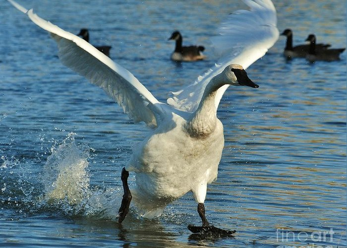 Swan Greeting Card featuring the photograph Swan Lake by Joy Bradley