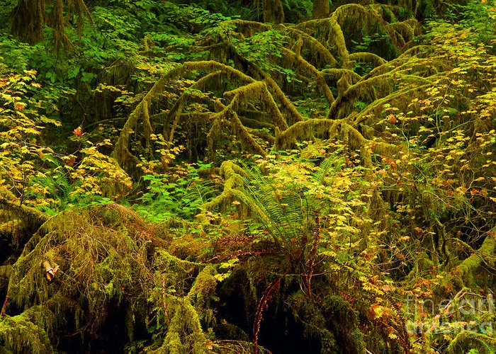 Silver Falls State Park Greeting Card featuring the photograph Temperate Rain Forest by Adam Jewell