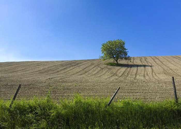 Agricultural Landscape Greeting Card featuring the photograph Tree by Bernard Jaubert