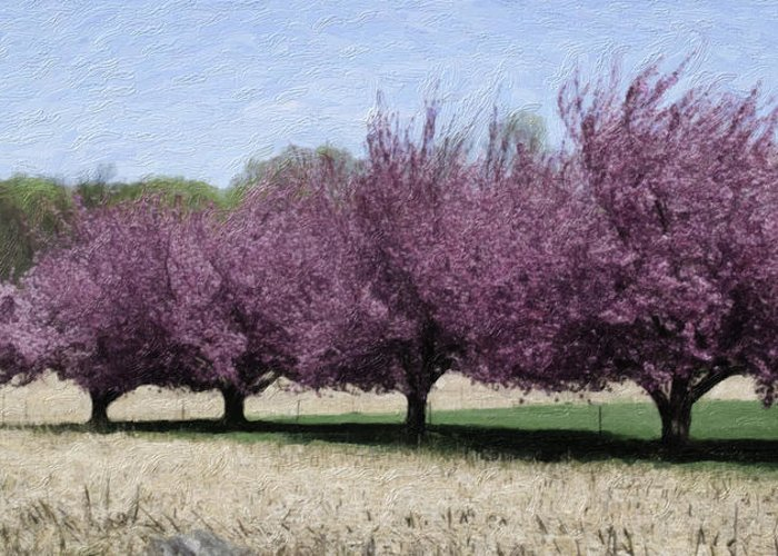 Tree Greeting Card featuring the photograph Trees On Warwick by Trish Tritz
