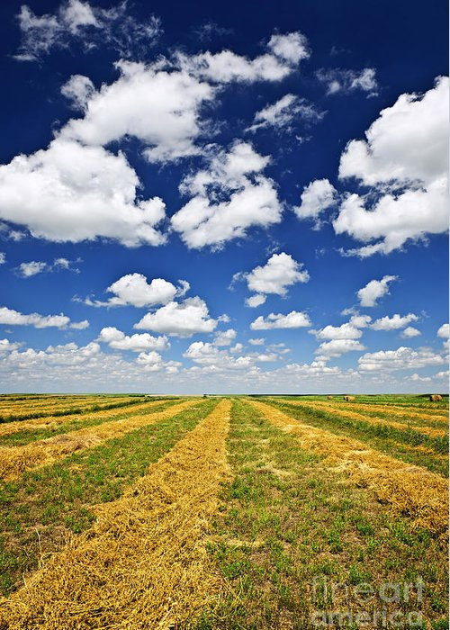 Agriculture Greeting Card featuring the photograph Wheat Farm Field At Harvest In Saskatchewan by Elena Elisseeva