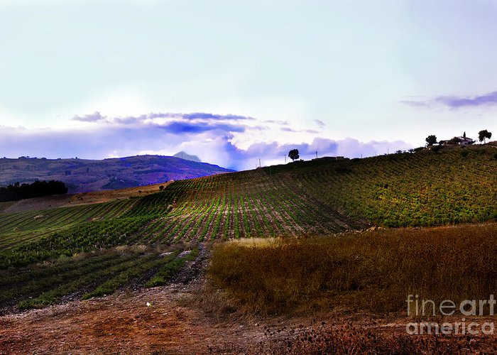 Land Greeting Card featuring the photograph Wine Vineyard In Sicily by Madeline Ellis