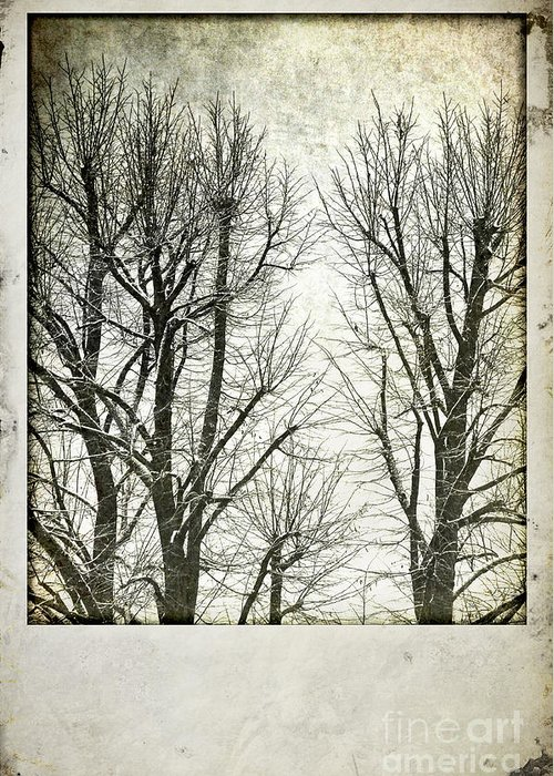 Snowy Greeting Card featuring the photograph Winter Trees by Silvia Ganora