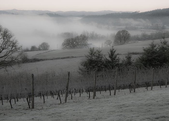 Vineyard Greeting Card featuring the photograph Winter Vineyard by Jean Noren