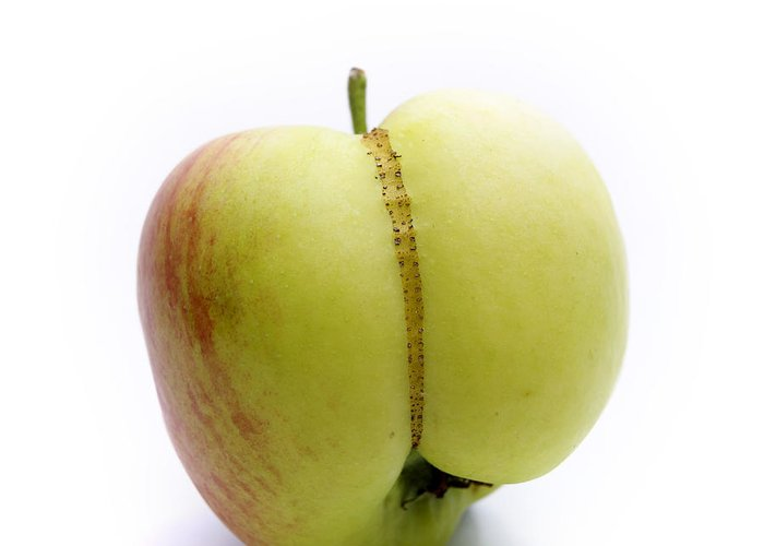 Agriculture Greeting Card featuring the photograph Apple by Bernard Jaubert