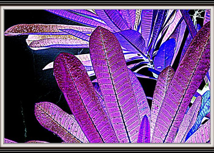 Leaves---leaves Greeting Card featuring the photograph Leaves by Anand Swaroop Manchiraju