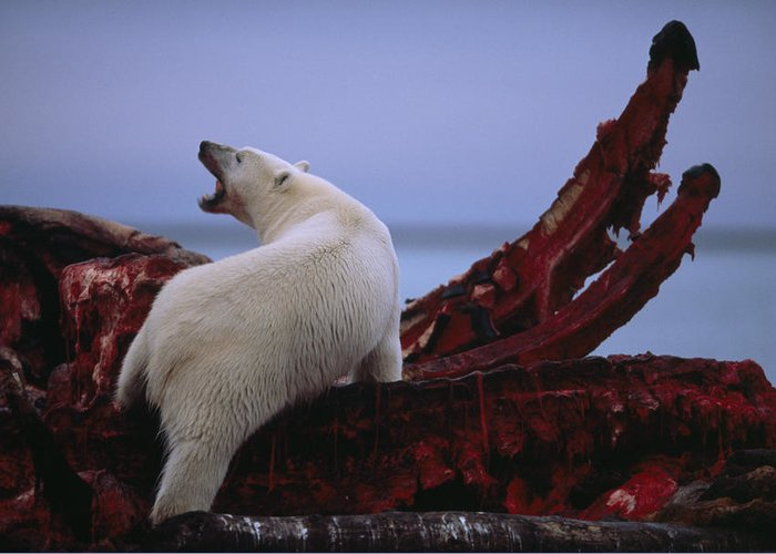 Arctic Ocean Greeting Card featuring the photograph Untitled by National Geographic