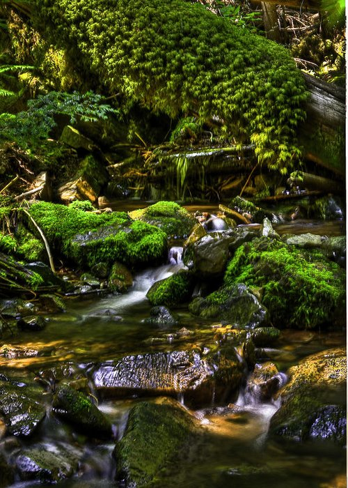 Creek Mountain Creek Greeting Card featuring the photograph Lost Girl Creek by Grover Woessner