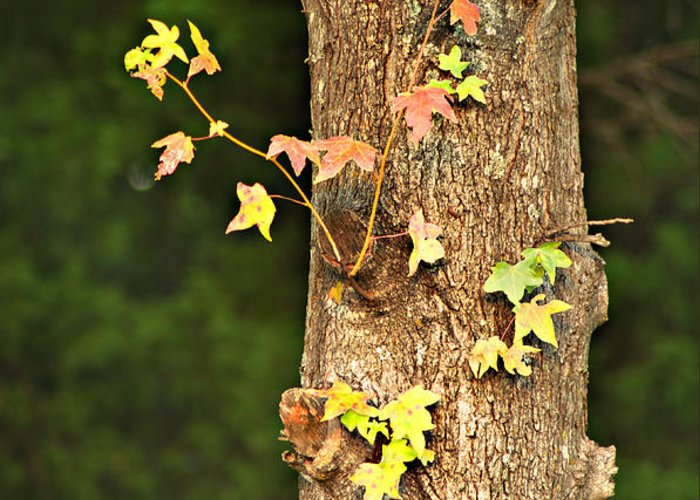 Autumn Greeting Card featuring the photograph 1209-0859 September Tease by Randy Forrester