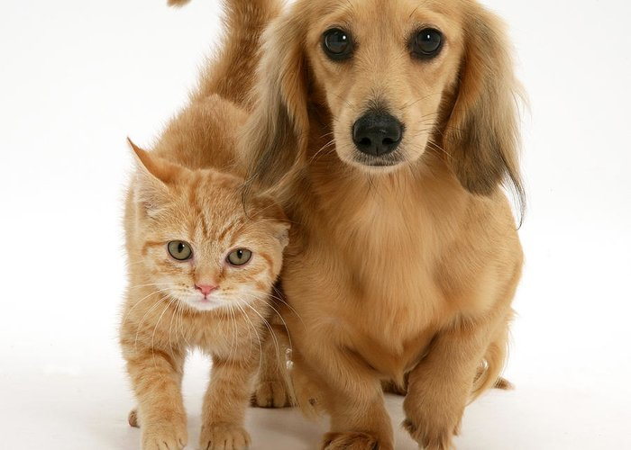 Animal Greeting Card featuring the photograph Kitten And Puppy by Jane Burton