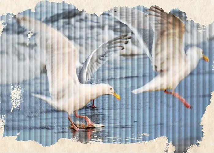 Seagulls Greeting Card featuring the photograph Seagulls by Debra Miller