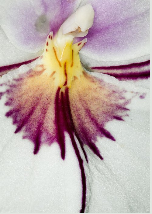 Orchid Greeting Card featuring the photograph Exotic Orchid Flowers Of C Ribet by C Ribet