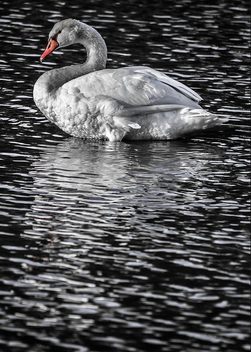 Greeting Card featuring the photograph Mute Swan by Brian Stevens