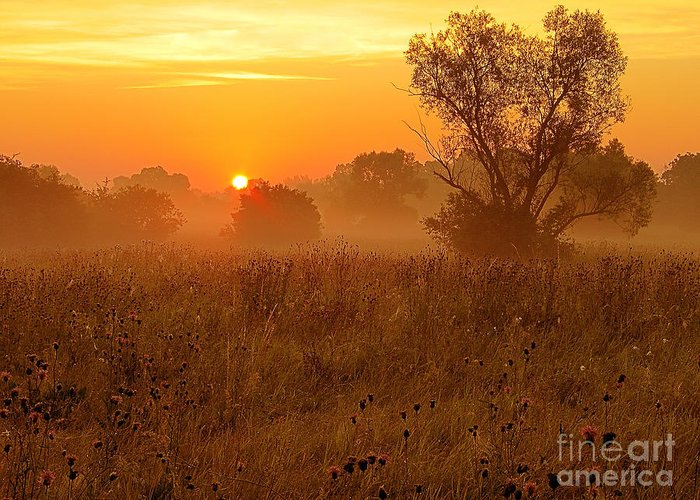 Nature Greeting Card featuring the photograph Sunset by Odon Czintos