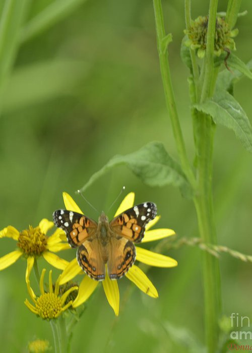 Butterfly Greeting Card featuring the photograph American Painted Lady by Donna Brown