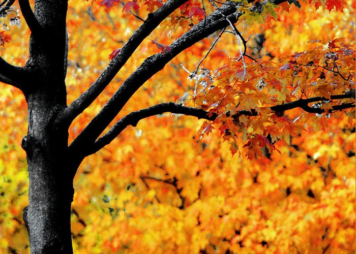 Fiery Orange Leaves Greeting Card featuring the photograph Blaze by Optical Playground By MP Ray