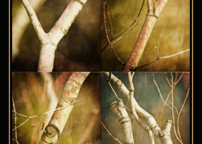 Four Trees Greeting Cards