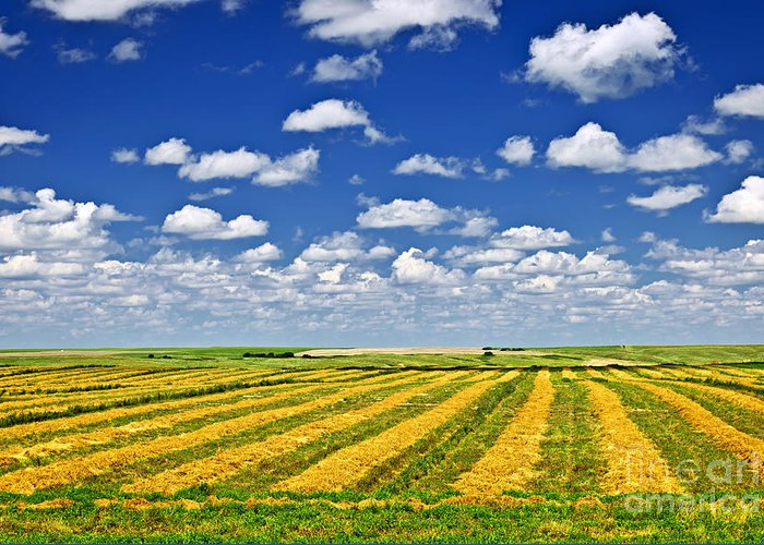 Agriculture Greeting Card featuring the photograph Farm Field At Harvest In Saskatchewan by Elena Elisseeva