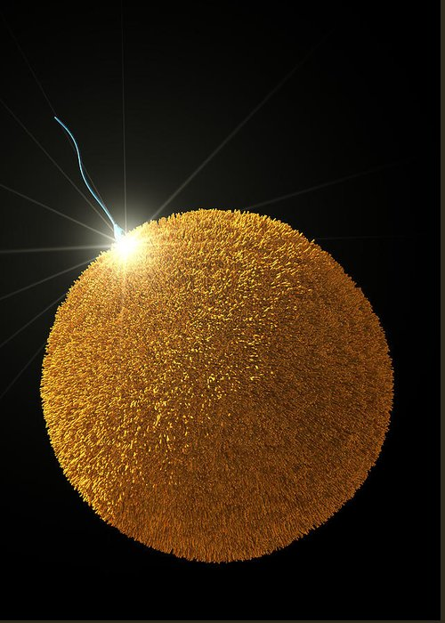 Sperm Greeting Card featuring the photograph Fertilization by David Mack