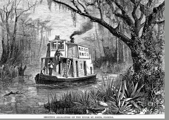 1874 Greeting Card featuring the photograph Florida: St. Johns River by Granger