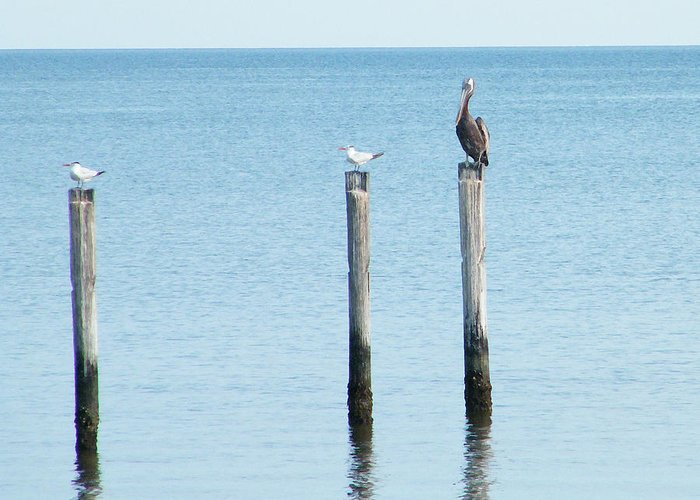 Seagulls Greeting Card featuring the photograph 2 Gulls And A Pelican by Brian Wright